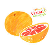 Child drawing of grapefruit. Vector felt pen child drawing of grapefruit Stock Image