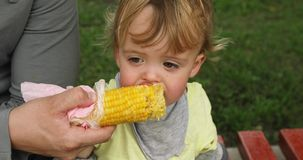 Child eat corn. Toddler boy eating corn on the street on a lawn background stock video