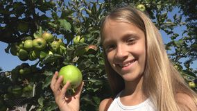Child Eating Apple, Kid in Orchard, Farmer Girl Studying Fruits in Tree stock photography