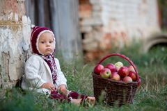 Child eating apples in a village in autumn. Little baby boy play royalty free stock images
