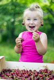 Child eating cherries Stock Image
