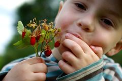 Child eating delicious strawberries Royalty Free Stock Photo