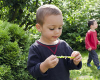 Child eating green peas Stock Image