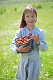Child eating strawberries in a field Stock Images