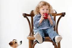 Child eats apple little dog looking isolated Stock Photos