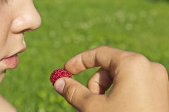Child eats raspberries. Baby eating delicious ripe raspberries Royalty Free Stock Photo