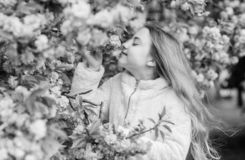 Child enjoy warm spring. Girl enjoying floral aroma. Kid on pink flowers of sakura tree background. Botany concept. Kid. Enjoying cherry blossom sakura. Flowers stock image