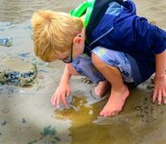 Child Explores Tide Pool Sea Anemone royalty free stock images