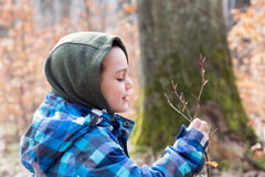 Child exploring nature in forest Royalty Free Stock Photos