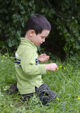 Child exploring nature. Child in grass exploring wild flowers at meadow Stock Photos