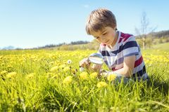 Child exploring nature in a meadow. Young boy exploring nature in a meadow with a magnifying glass looking for insects stock image