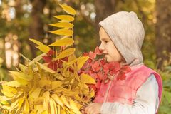 Child in the fall. girl with leaves. park. walk through the park royalty free stock photos