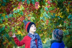Child on a farm in autumn. Little boy and his brother friend playing in decorative apple tree orchard. Kids pick fruit. Toddler ea stock images