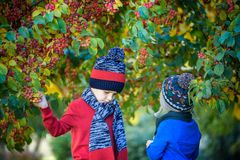 Child on a farm in autumn. Little boy and his brother friend playing in decorative apple tree orchard. Kids pick fruit. Toddler stock images