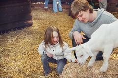 Child and father taming a goat kid Royalty Free Stock Images