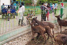 Child feed deer in Zoo Stock Photo
