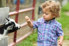 Child Feeding Baby Goat Stock Image