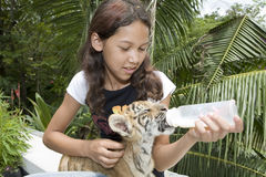 Child feeding baby tiger Royalty Free Stock Image