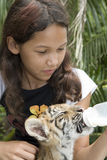 Child feeding baby tiger Stock Images