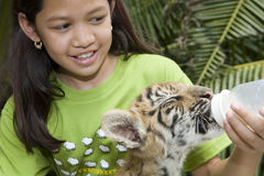 Child feeding baby tiger. In a Zoo in Bangkok stock photo