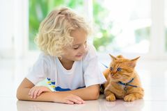 Child feeding home cat. Kids and pets royalty free stock photo
