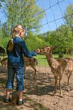 Child feeding deer by fence Stock Photos