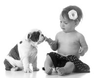 Child feeding the dog Royalty Free Stock Image