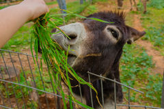 Child feeding a donkey Royalty Free Stock Image