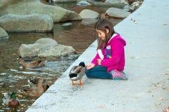 Child Feeding Duck Stock Photos