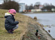 Child feeding ducks. Stock Photography
