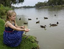 Child Feeding Ducks. Stock Photos