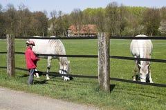 Child feeding horse Royalty Free Stock Photos
