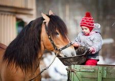 Child feeding a horse in winter stock photos