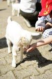 Child feeding a lamb Stock Photo