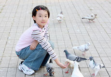child feeding pigeon Royalty Free Stock Images