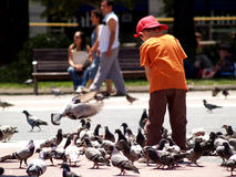 Child feeding pigeons. At barcelona Stock Image