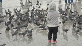 Child feeding pigeons, baby feeding birds on city square. Child feeding pigeons, baby feeding birds, baby on square stock video