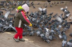 Child feeding pigeons. Outdoors groats Royalty Free Stock Image
