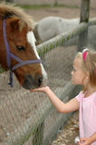 Child feeding pony. A little white hand of a beautiful blond caucasian girl child feeding a pony on a paddock of a farm Royalty Free Stock Image