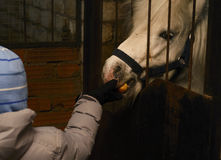 Child feeding pony apple. In the stable Royalty Free Stock Photo
