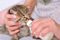 Child feeding small kitten from the bottle Stock Photography