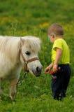 Child feeding white pony royalty free stock images