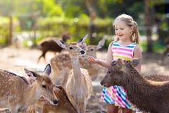 Free Child Feeding Wild Deer At Zoo. Kids Feed Animals Stock Photos - 142779683