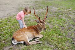 Child feeding wild deer at petting zoo. Kids feed animals at outdoor safari park. Kid and pet animal. Girl feeds wild deer at petting zoo. Child with animals at stock images