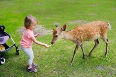 Child feeding wild deer at petting zoo. Kids feed animals at outdoor safari park. Kid and pet animal. Girl feeds wild deer at petting zoo. Child with animals at royalty free stock photos