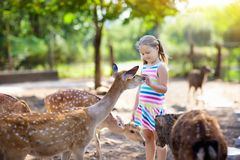 Child feeding wild deer at zoo. Kids feed animals. Child feeding wild deer at petting zoo. Kids feed animals at outdoor safari park. Little girl watching stock photography