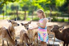 Child feeding wild deer at zoo. Kids feed animals. Child feeding wild deer at petting zoo. Kids feed animals at outdoor safari park. Little girl watching stock image