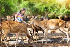 Child feeding wild deer at zoo. Kids feed animals. Child feeding wild deer at petting zoo. Kids feed animals at outdoor safari park. Little girl watching stock photos