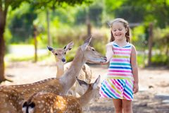 Child feeding wild deer at zoo. Kids feed animals. Child feeding wild deer at petting zoo. Kids feed animals at outdoor safari park. Little girl watching stock photo