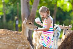 Child feeding wild deer at zoo. Kids feed animals. Child feeding wild deer at petting zoo. Kids feed animals at outdoor safari park. Little girl watching royalty free stock photos